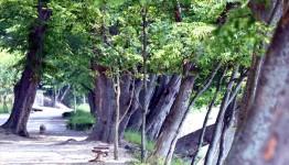 화순군 동복면 연둔리 숲정이... 광주 근교 최고의 숲 바람